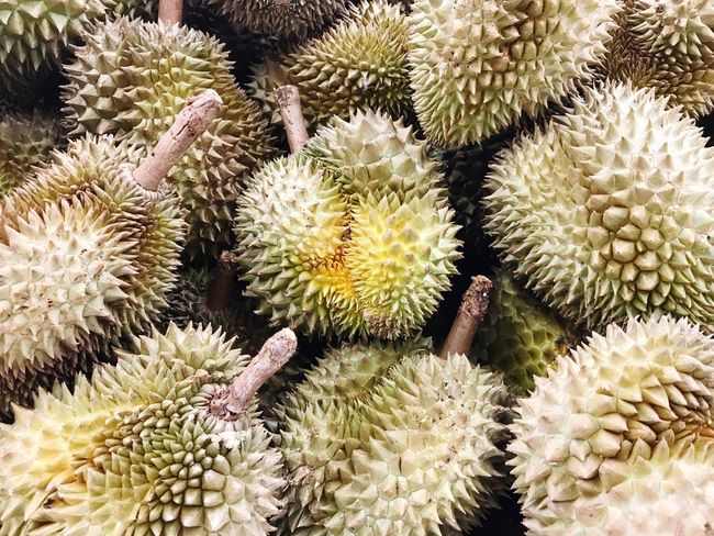 Thorn Cactus Spiked Backgrounds Full Frame Plant Growth Close-up Outdoors Nature No People Arid Climate Food Desert Freshness Beauty In Nature Day Durians