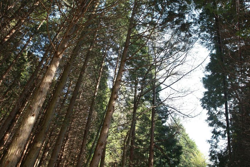 Trees Trees And Sky Treelovers Biggreen DEEP FOREST 바른생태살림원 | be the Nature