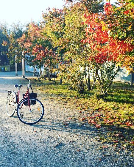 Autumn colors and a bike 📸🚲🍁🍂🌿 Autumn Nicecolors September Beautifulplace