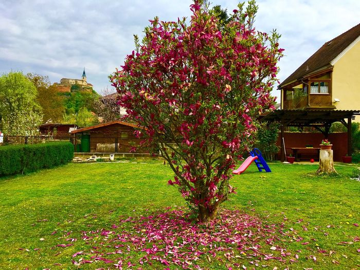 Baum 🌳🌲 Building Exterior Built Structure Architecture Tree Grass House Flower Sky Outdoors Growth Day Nature One Person Real People Cloud - Sky Beauty In Nature People