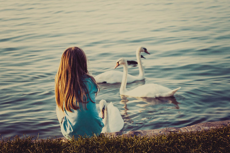 Animals In The Wild Bird Capture The Moment EyeEm Best Shots EyeEm Nature Lover Lake Long Hair Nature Nature On Your Doorstep Naturelovers One Animal One Person Outdoors Sitting Swan Water Hungary Balaton Lake Girl Sunset The Week On Eyem EyeEmNewHere Your Ticket To Europe