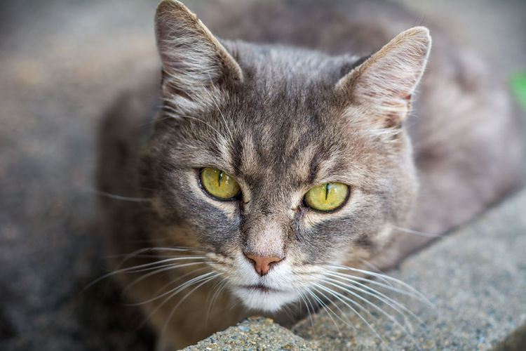 Close-up portrait of tabby cat sitting on floor