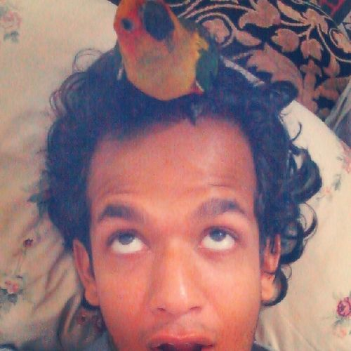 OMG!!! There's a nest on my head :O :D Omg Expression Surprise Sunconure Pet parrot handtamed petslove animalslove fun nest head messed hair Karachi TheWildlifeExperienceCentre