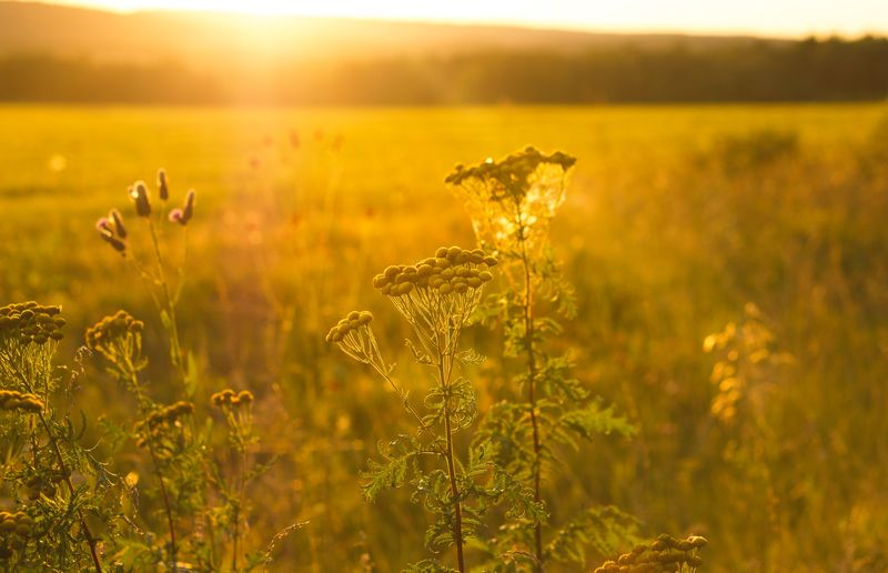 Plants growing on field against bright sun