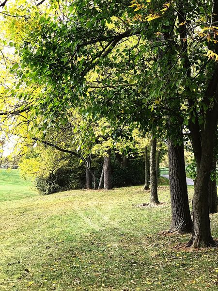 Tree Grass Nature Growth No People Outdoors Beauty In Nature Green Color Tranquil Scene Tranquility Landscape Scenics Day Willow Tree Serine Park