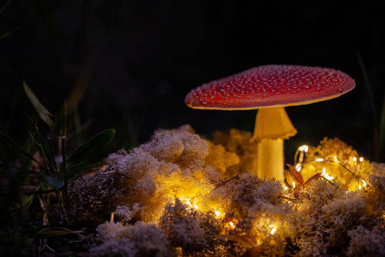Close-up of mushroom on illuminated tree at night