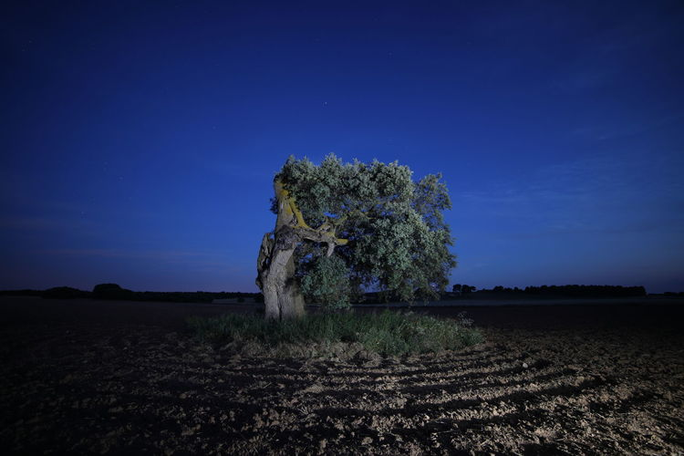 Trees on field against clear sky at night