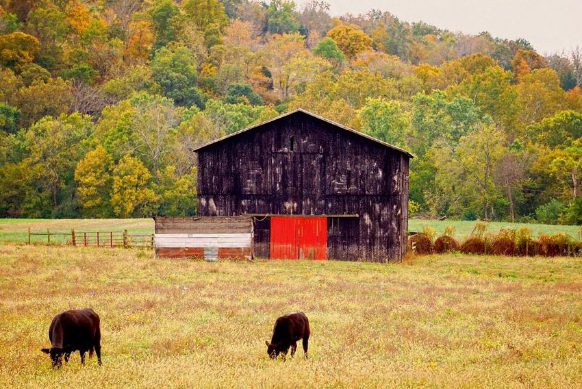 Nature Beauty In Nature Animal Themes Scenics Landscape Farm Life Fall Colors Fall Beauty Horse Fence Owingsville Ky Travelky ExploreEverything Countryside