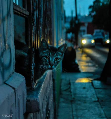 amigos del camino / friends along the wayCat Cats Cats Of EyeEm Street Streetphotography Street Photography
