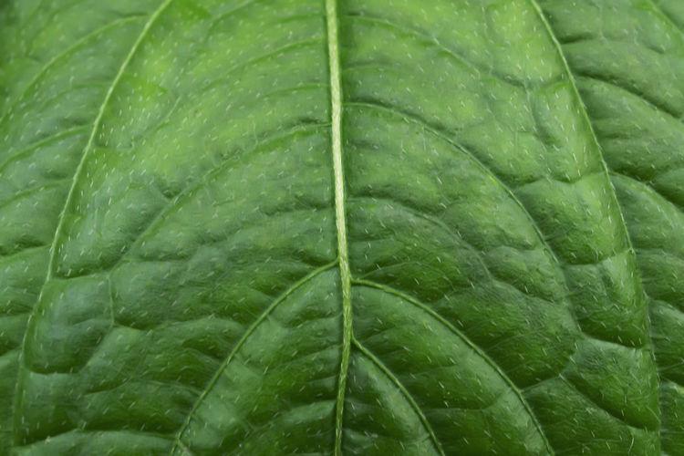 Full frame shot of wet green leaves during rainy season