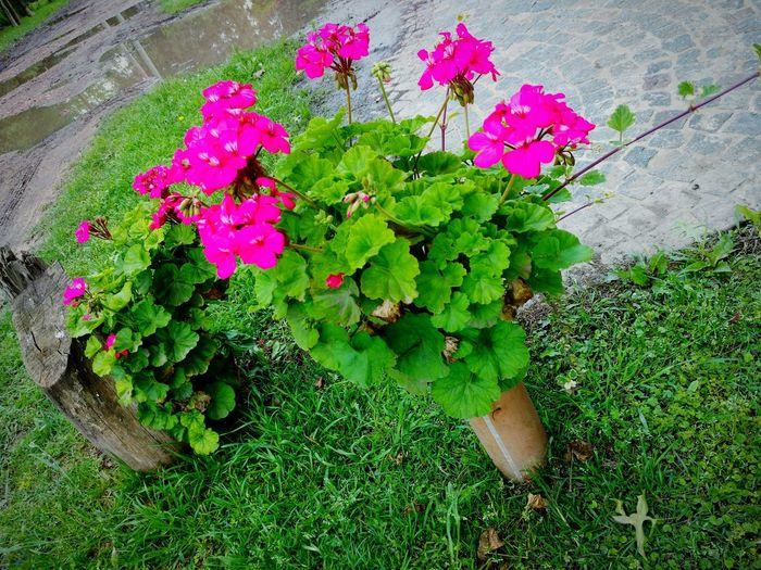 Flores Primavera Florwers Spring Vivid Colores Vivido Coloures Planta Natural Vida Life Springflowers