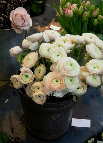 Buttercup Buttercup Family Close-up Day Florist Flower Flower Head Flower Market Flower Shop For Sale Fragility Fresh Freshness High Angle View Indoors  Nature No People Persian Buttercup Ranunculus Roses Rosé Small Business Spring Tulips White