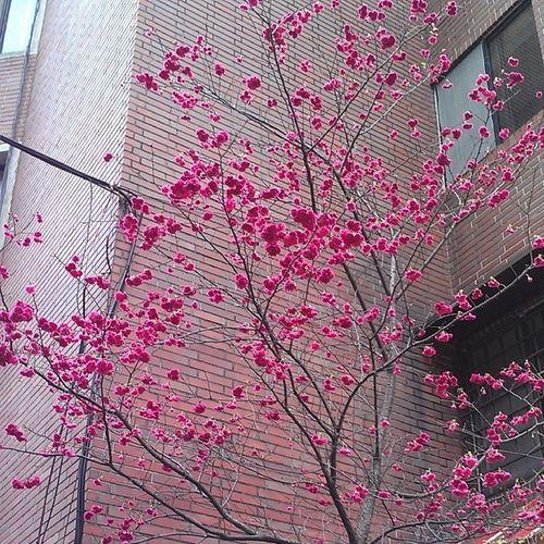 連日大雨,滿街的花還能開成這樣子不容易啊 Taipei On Street Flowers