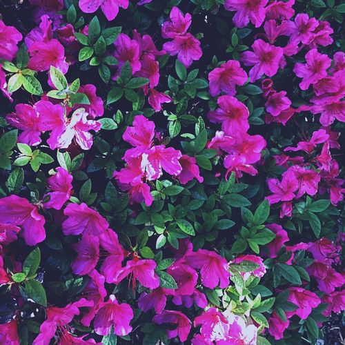 Flower Plant Growth Petal Beauty In Nature Nature No People Pink Color Leaf Outdoors Blooming Freshness Flower Head Day Close-up