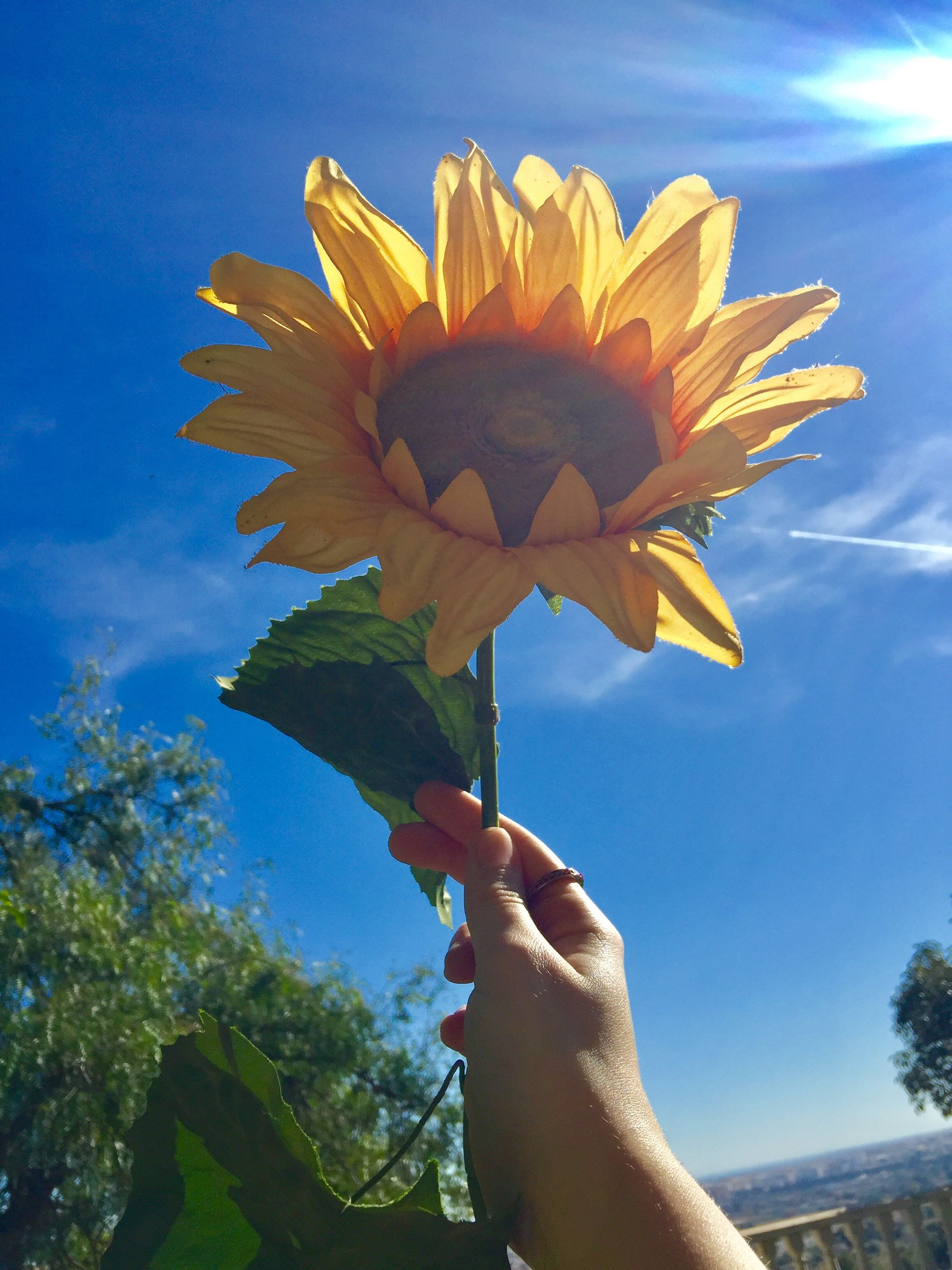 human hand, hand, flower, plant, flowering plant, freshness, one person, fragility, human body part, real people, vulnerability, holding, sky, nature, personal perspective, petal, beauty in nature, close-up, flower head, lifestyles, body part, finger, outdoors