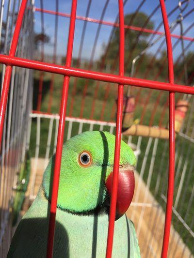 Parrot Parrots Of Eyeem Myparrot