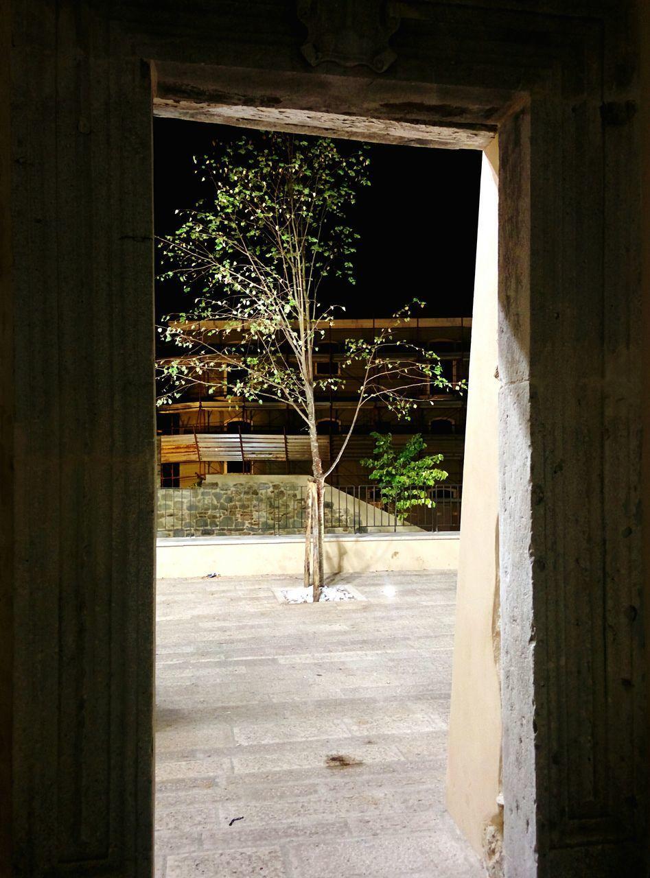 architecture, doorway, built structure, indoors, no people, window, day, plant, open door, tree
