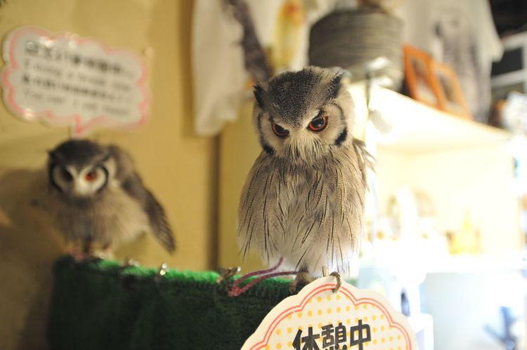 Animal Themes Bird Close-up No People Owl