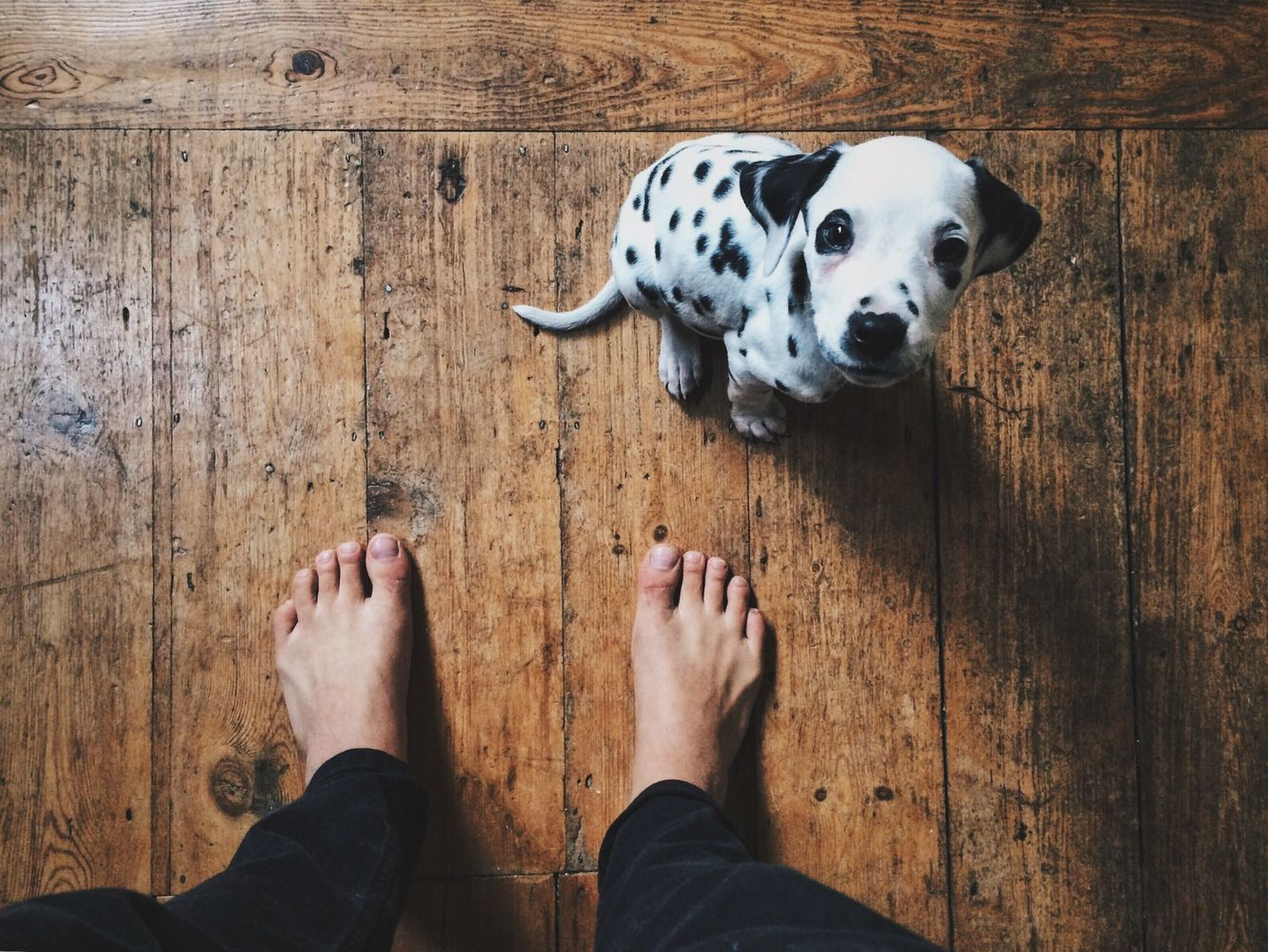 pets, mammal, dog, one animal, real people, domestic animals, one person, standing, lifestyles, low section, human leg, human body part, spotted, dalmatian dog, women, day, outdoors