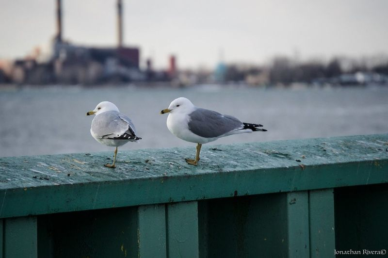 Riverside Gulls Check This Out Hanging Out Hello World Hi! Relaxing Cheese! That's Me Taking Photos Enjoying Life EyeEm Best Shots