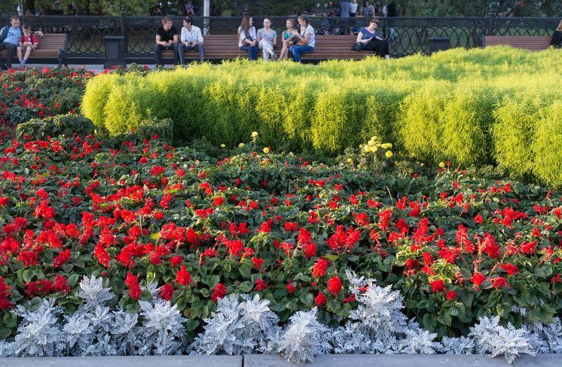 Городские улочки. Nature Streetphotography Novosibirsk Flowers Street
