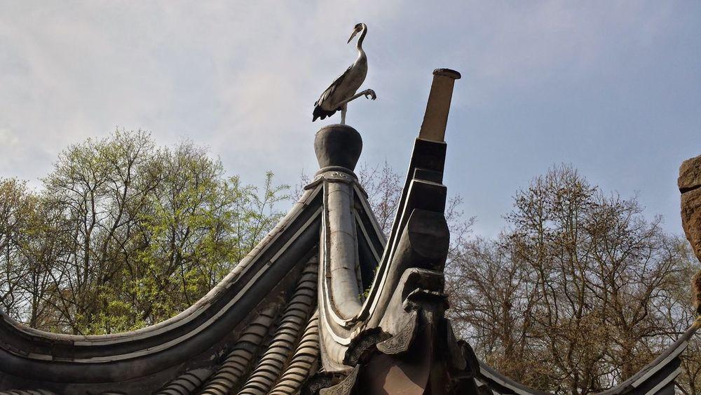 Chinagarten Kranich Ruhe Und Stille