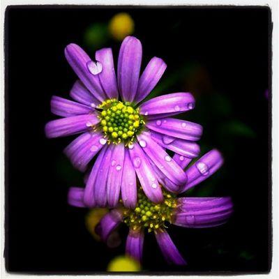 Flowers Flower Spring Lobostudio Lobo_flowers Juliesfavs
