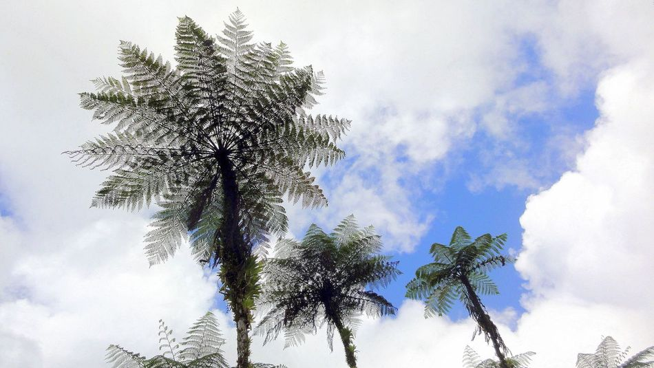 Beauty In Nature Ferns From My Point Of View From Where I Stand Growth Idyllic Lookingup Majestic Nature Non Urban Scene Non-urban Scene Outdoors Palm Tree Perspective Tree Tropical Climate