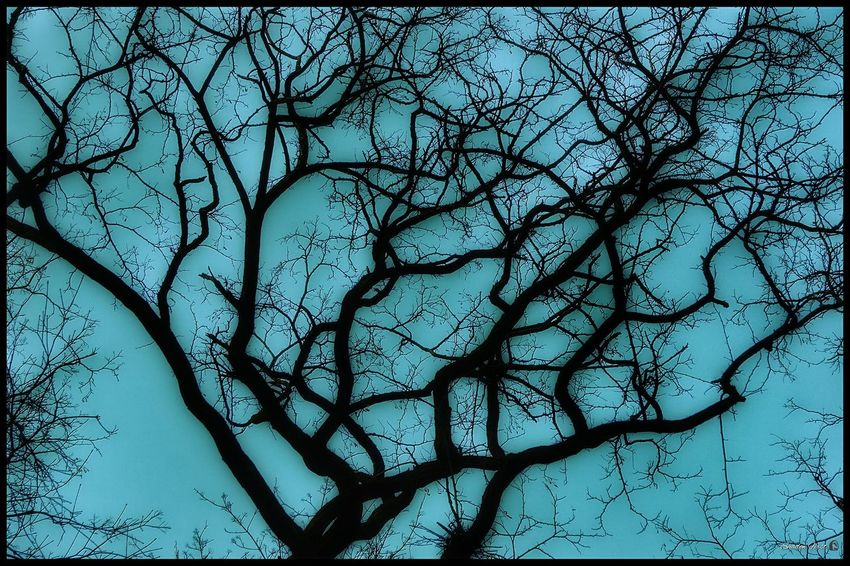 Neurons... dla S. 😉 Good Morning :) Tree_collection  Tree And Sky EyeEm Nature Collection Nature_perfection Nature_collection EyeEm Nature Lover From My Point Of View Exceptional Photographs Capture The Moment Taking Photos Minimalism Getting Inspired Beuty In Nature Freshness Park Life RelaxingShootermag Drastic Edit Backgrounds Happy :) Sel55210mm Sony A6000 Poland Silesia
