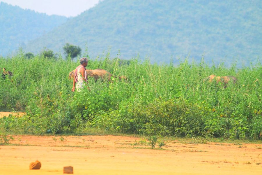 Busy Farmer. One Person Nature One Man Only Agriculture People Summer Adults Only Real People Rural Scene Farmer Full Length Cereal Plant Lifestyles EyeEmNewHere