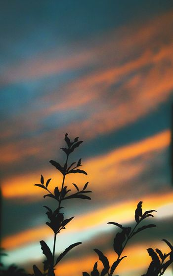 Low angle view of trees against sky at sunset