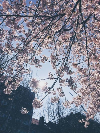 Tree Trees Flower Flowers Blooming Blossom Blossoms  Nature