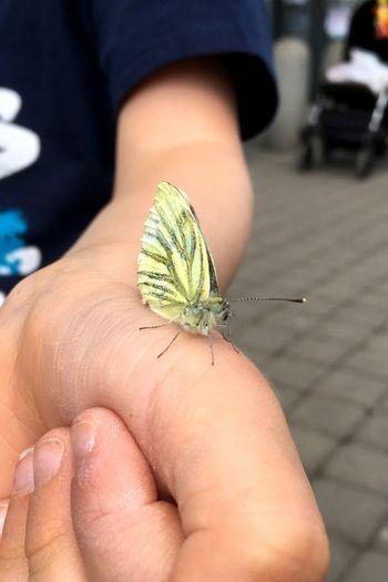 Sleepy butterfly Street Hand Butterfly