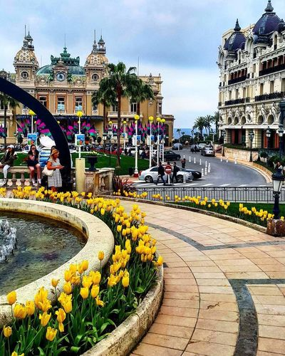 Tulips blooming by fountain against monte carlo casino