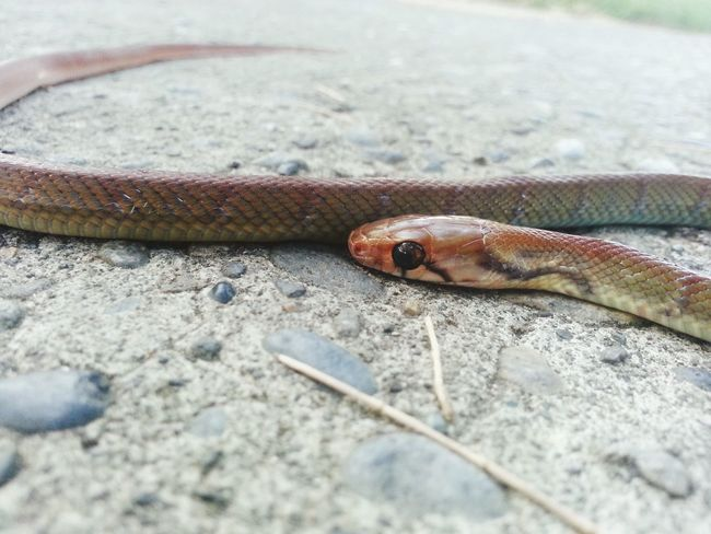 On my way. . . Snakes Snakes♥ Snake Snake! Snake Eyes Snake ♥ Snakes Of Eyeem Snakes Are Beautiful