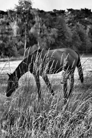 Black & White Horse Check This Out Enjoying Life
