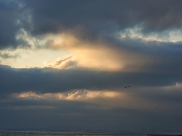 Seagull flying in the sunset Cloud - Sky Sky Bird Flying Vertebrate Beauty In Nature Animal Scenics - Nature Tranquil Scene Tranquility Animal Themes Animal Wildlife Animals In The Wild Sunset Mid-air One Animal No People Nature Water Horizon Over Water Outdoors