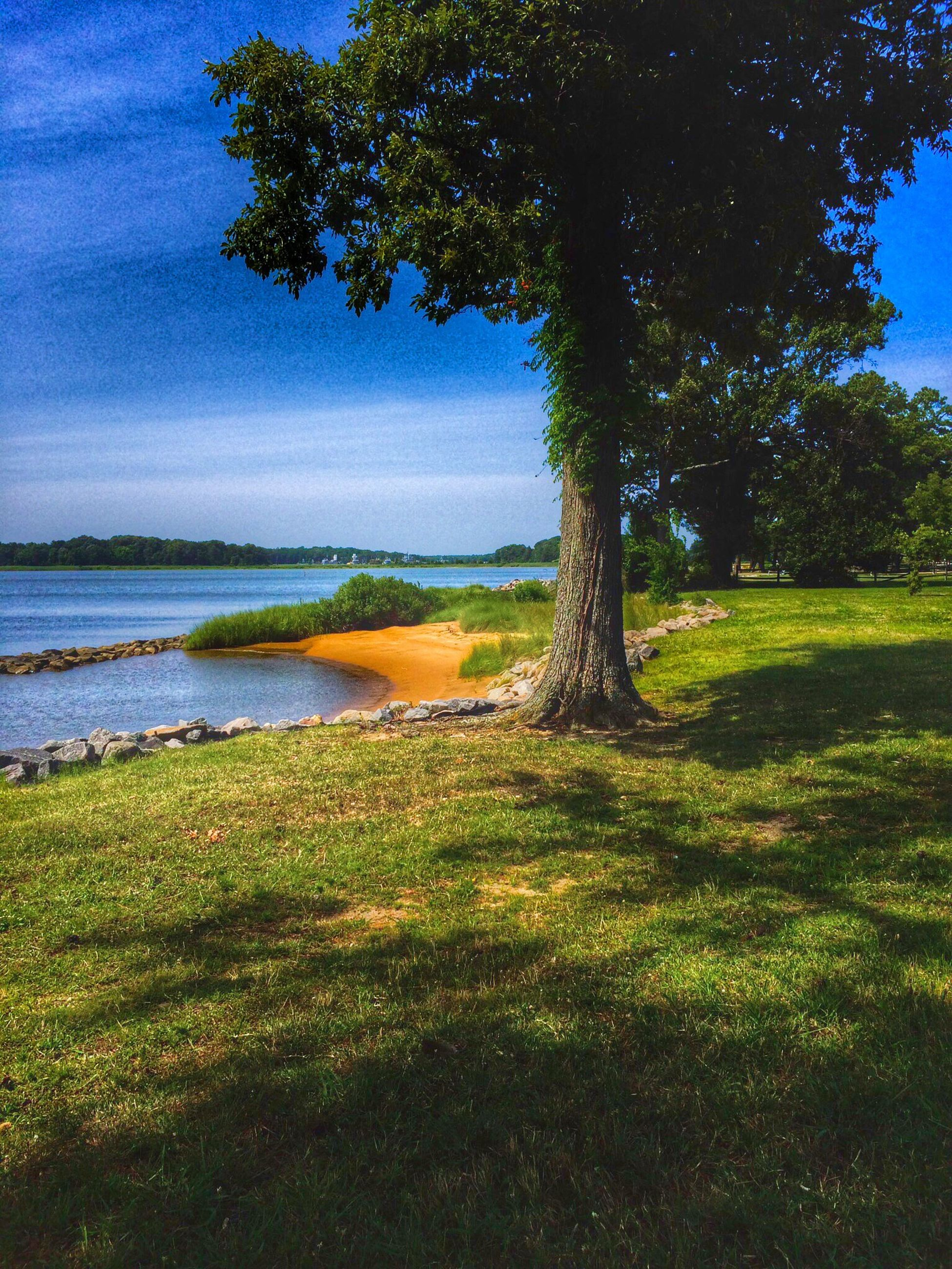 water, tree, beauty in nature, scenics, tranquility, blue, nature, tranquil scene, green color, growth, idyllic, sunlight, outdoors, sea, plant, day, sky, forest, no people, non-urban scene