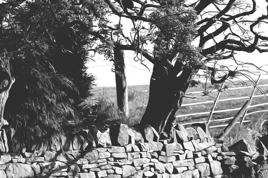Black And White Tree Branch Day Growth Tree Trunk No People Outdoors Nature Sky Tree Stone Wall Beauty In Nature Nature