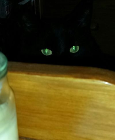 It is Monday, or as I fondly call it Minday, here in the USA and my kitty wants to say hello! Master Grimly I Love My Cat The Eyes Say It All Wild In The Hills