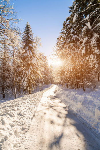Shades Of Winter Slovenia Slovenia Scapes Beauty Beauty In Nature Clear Sky Cold Temperature Day Forest Freshness Landscape Nature Outdoors Rural Scene Scenics Sky Snow Sunlight Sunset Tranquil Scene Tree Winter