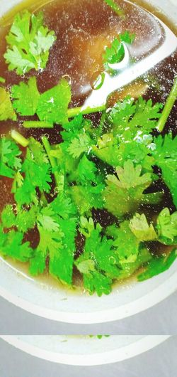 Soup ซุป แกงจืด ซุปไก่ Chinese Food China Food อาหารจีน Close-up Green Color
