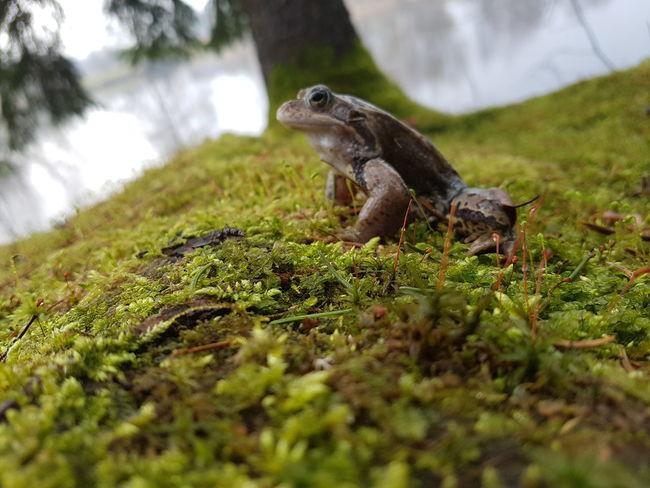 Water Reptile Grass