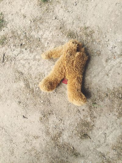 Beware of the dog Teddybear headless Decapitated murder Humour beware Dog pets High Angle View Outdoors No People Day Loved iPhone