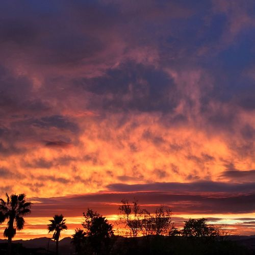 Mountain View Eye4photography  Palm Trees California Sunset Cloud Sugar Sweet Shot Nature Landscape Los Angeles, California