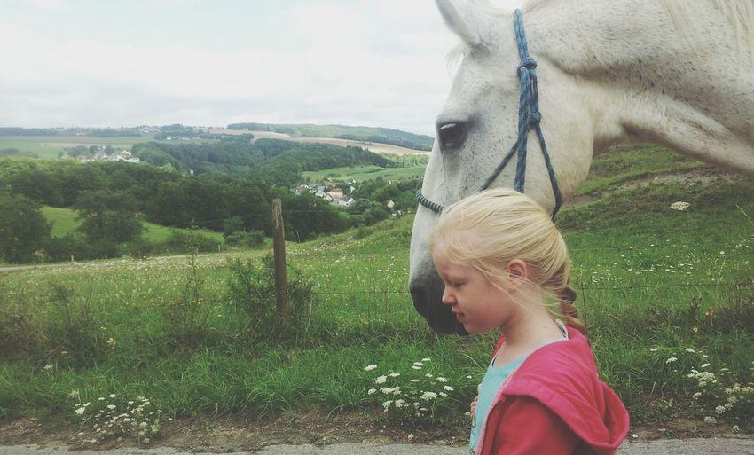 Horse Walking Landscape Nature