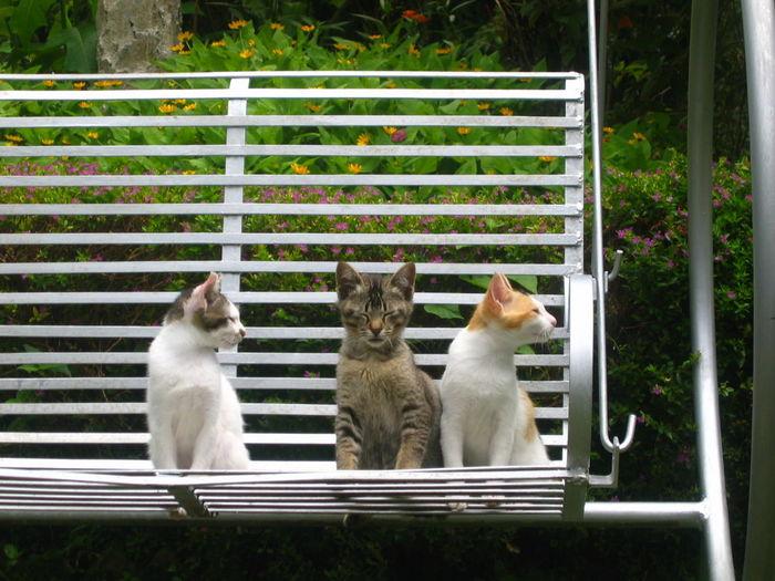 Close-up of three kittens