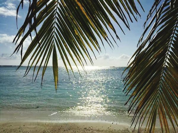 Sea Palm Tree Beach Water Sky Nature Horizon Over Water Sunlight Outdoors Tree Scenics Beauty In Nature Tranquility No People Day Tropical Climate Vacations Sand Horizontal