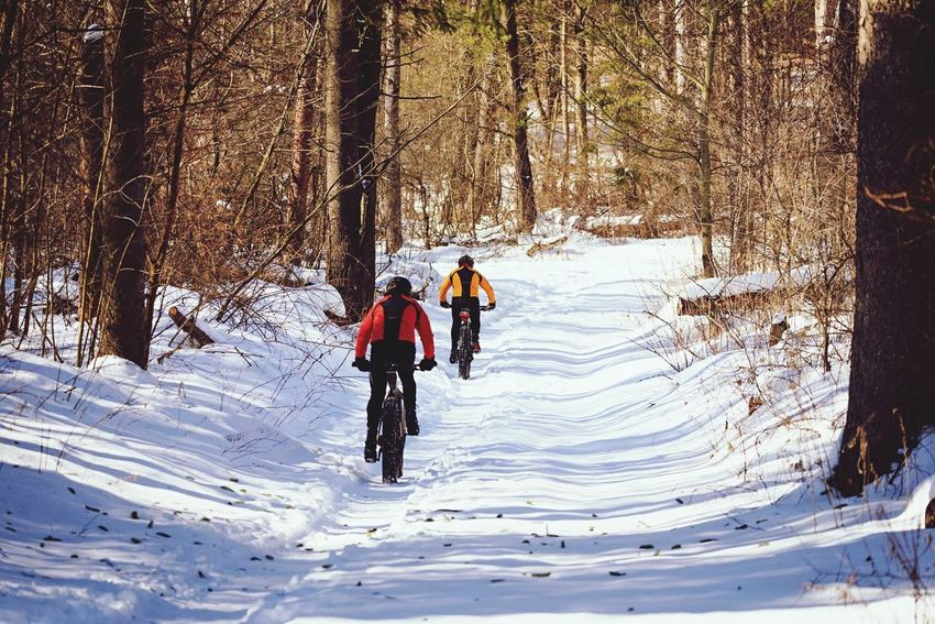 Snow Cold Temperature Winter Tree Day Outdoors Nature Real People Togetherness Nature Beauty In Nature Forest Photography Forestwalk Winter Sport Fat Bike The Way Forward Tranquility Tranquil Scene Idyllic Cycling Winter Cycling