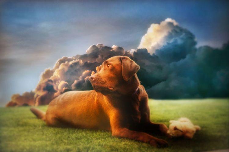 Dog lying in a field